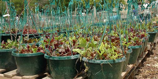 Bradshaw-Knight Foundation supports urban agriculture.